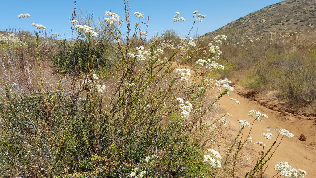 Exploring Poway's Blue Sky Ecological Reserve